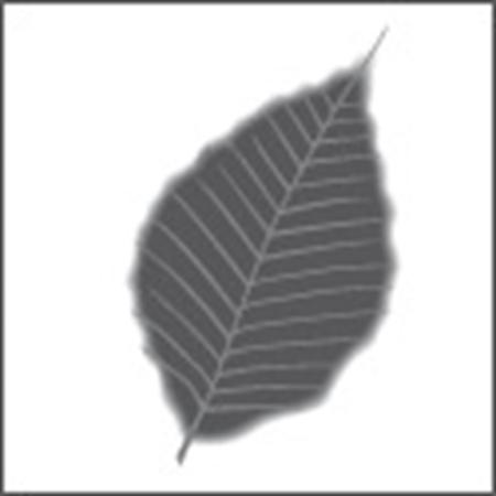 Immagine per la categoria Erboristerie & Parafarmacie